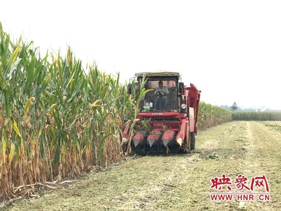 宝丰县:玉米增收惹人喜 机声隆隆丰收忙
