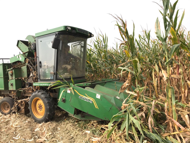 宝丰:玉米增收惹人喜 机声隆隆丰收忙