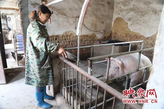 平顶山市姜鲜花:养猪走上致富路
