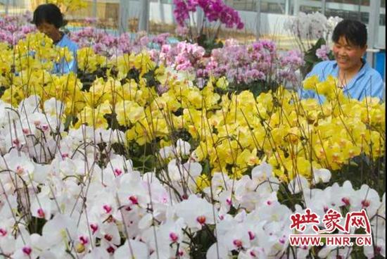 云上2020年中原花木交易博览会在鄢陵开幕