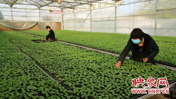 """河南扶沟:全力发展蔬菜产业 打造""""中原菜都"""""""