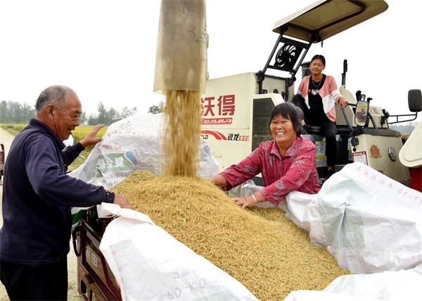 淮滨:水稻田里传喜讯
