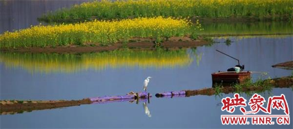 信阳淮滨:白露至 淮南湿地赏白鹭