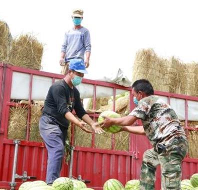 河南援疆干部助力哈密农副产品销售——线上线下 联动卖瓜