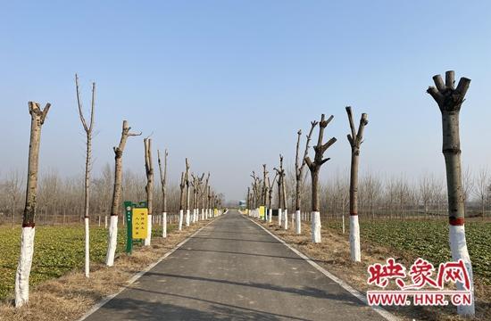 宝丰县:改善人居环境 打造绿色村庄