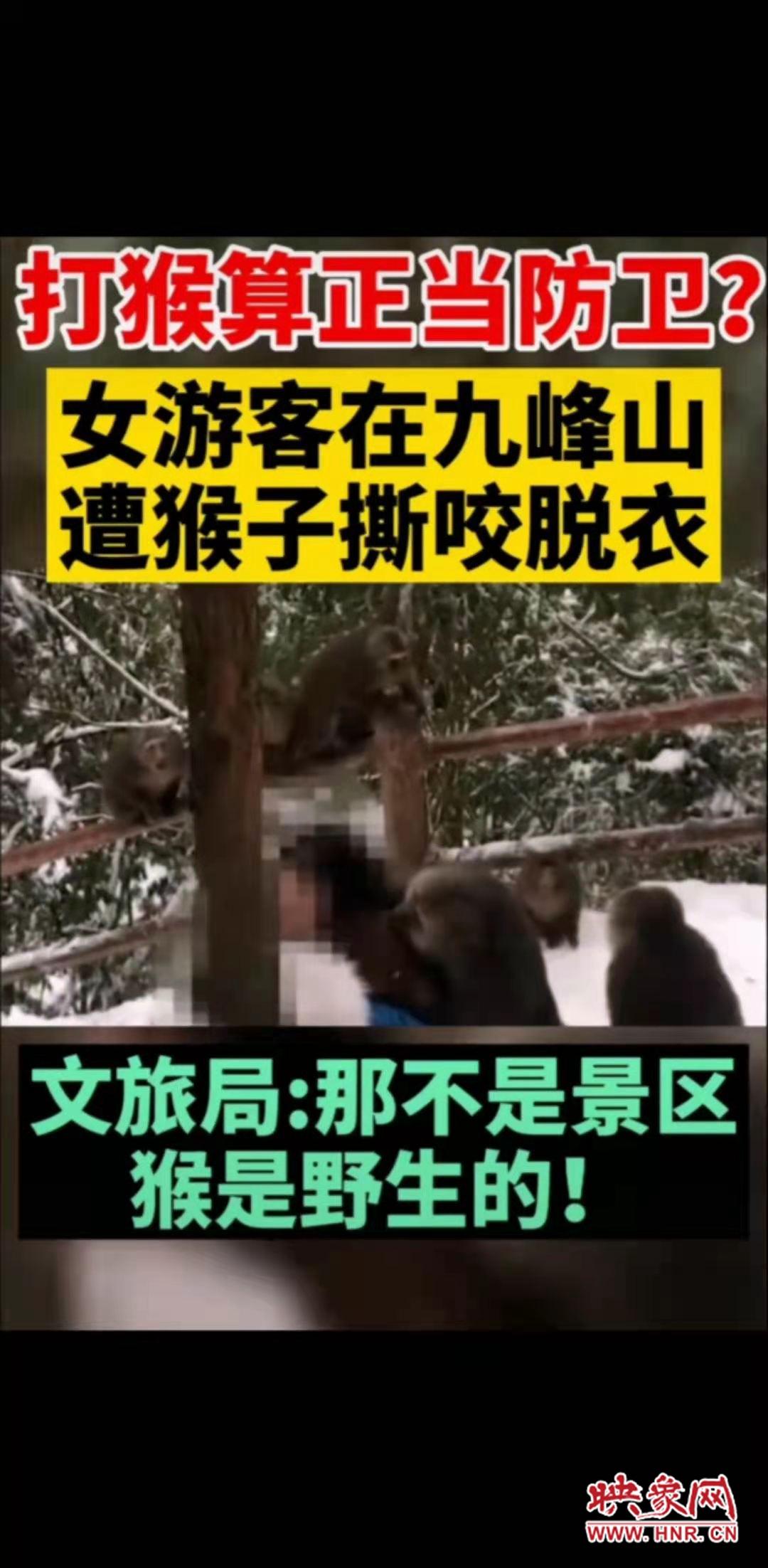 网传女游客遭九峰山猴子撕咬?汝州景区释疑:非本地九峰山