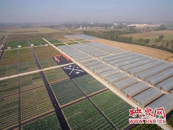 """长葛:种业小镇赋能农业强""""芯"""""""