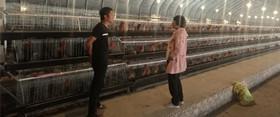 汝州市夏店镇:优质养殖产业带动群众增收