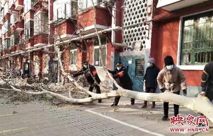 郑州:夜间施工挂断树枝致居民家中门打不开 绿化人员及时抢险