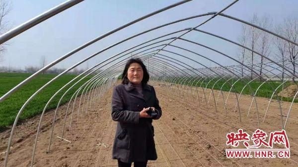 平舆县阳城镇刘三妮:创业脱贫事业兴 乡村振兴排头兵