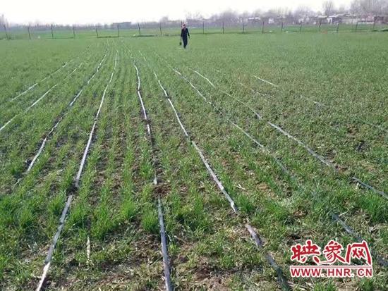 宝丰县:滴灌智能化 节水又增效