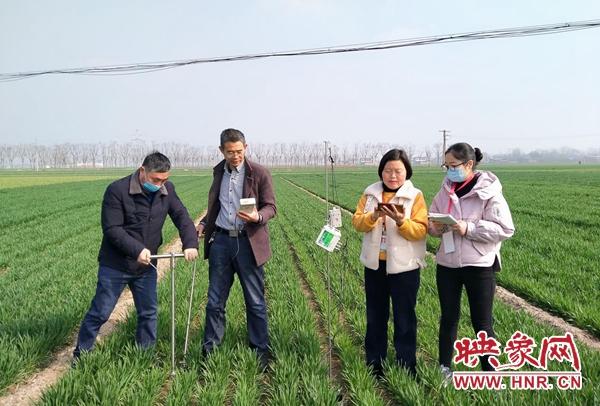 杞县:农情监测为春季花生播种奠定基础