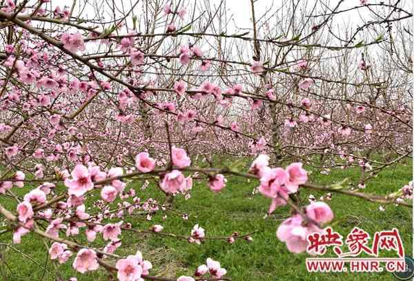 南阳市卧龙区:举办文化旅游节 助力乡村振兴