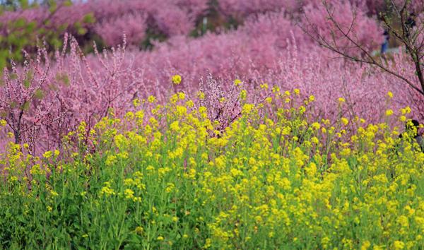 春季赏花正当时 百花烂漫等你来