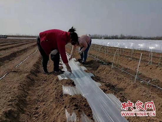 """平顶山宝丰县:""""一村一品""""助力群众增收致富"""