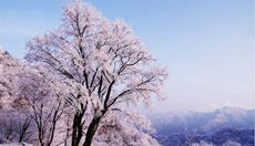 春雪飘落山更秀