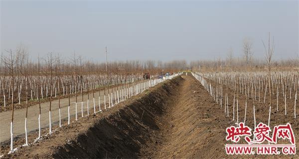 淮滨:做好生态绿化 实现生态宜居
