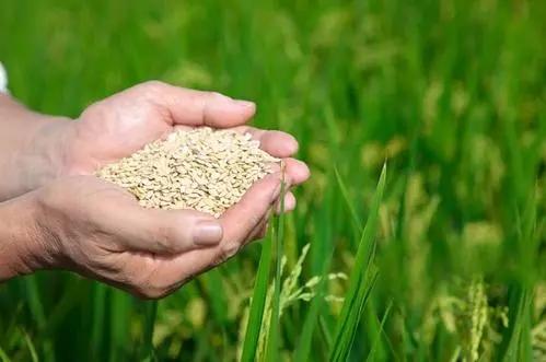 河南省粮食和物资储备局2020年度调研课题工作取得丰硕成果