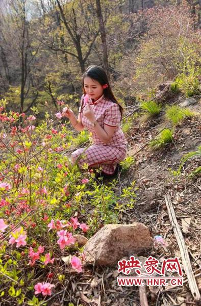 河南鲁山杜鹃花节将于4月17日举办
