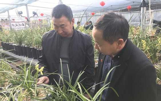 西峡县桑坪镇:发展兰花产业 带领群众致富