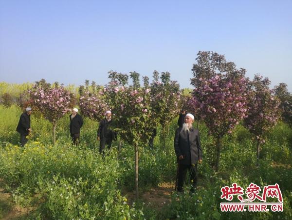 郏县姚庄回族乡组织长寿老人开展赏樱活动