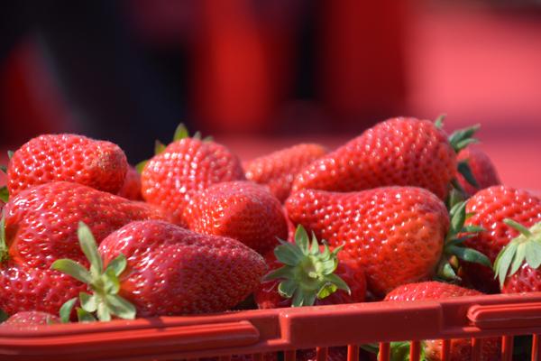 """""""莓""""出幸福 鹤壁市举办首届草莓节"""