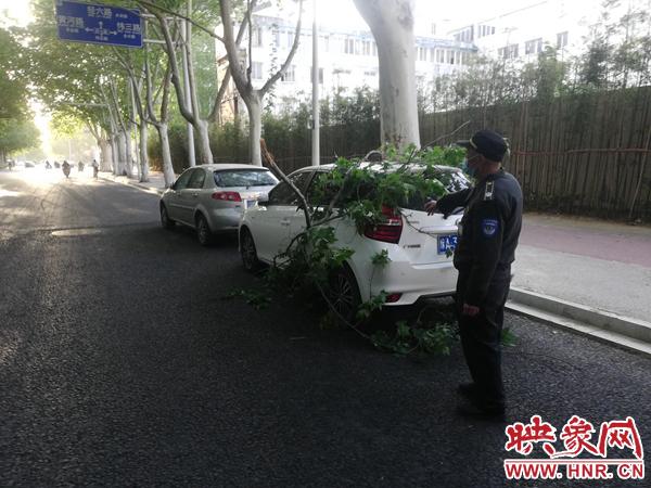 郑州一轿车停路边被断树枝砸中 专业人士:死树枝可索赔,活树枝有难度