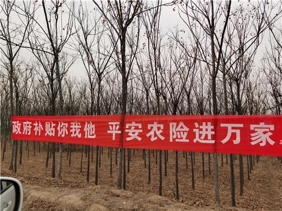 平安产险郑州中支积极开展农险承保电子化宣传活动