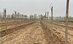 """唐山市回应""""丰润数百亩耕地里种树"""":将全面调查核实"""