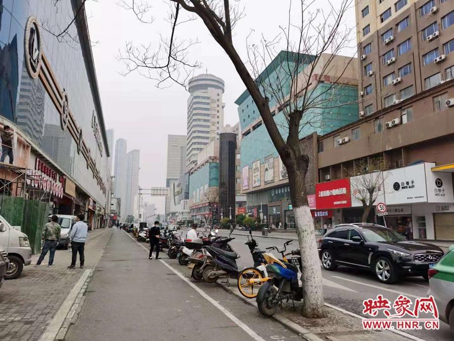 郑州太康路地下已空不适合种树 市民呼吁赶快将三棵濒死之树移走