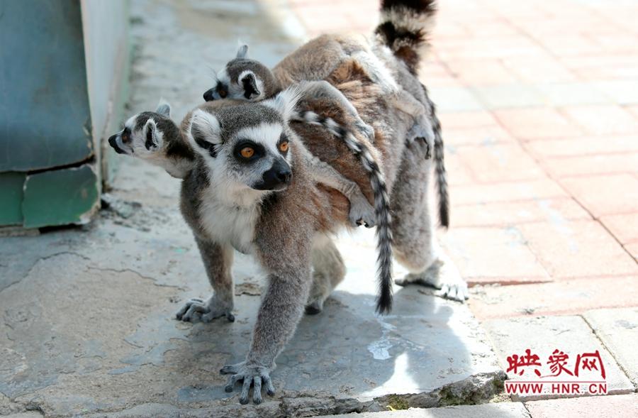 """郑州市动物园白狮家族首添新丁还有""""萌宠""""等你来打卡"""