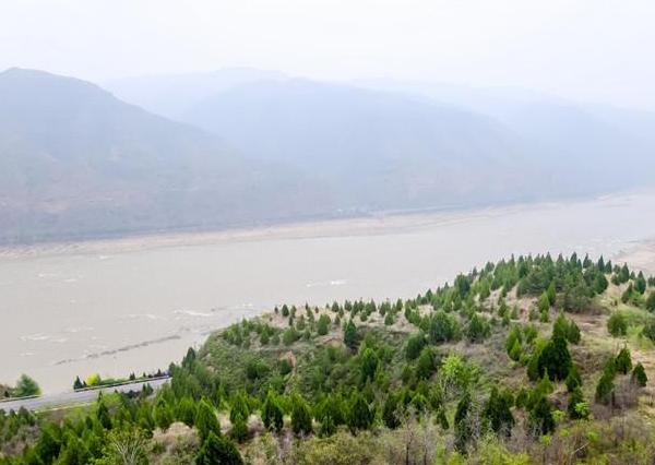 """手机""""种""""出""""保护黄河幸福林"""" 超6万棵侧柏栽植壶口瀑布岸边"""