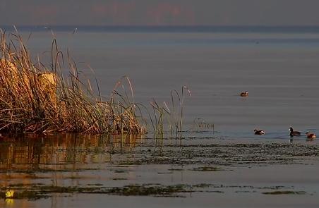 共护美丽湿地