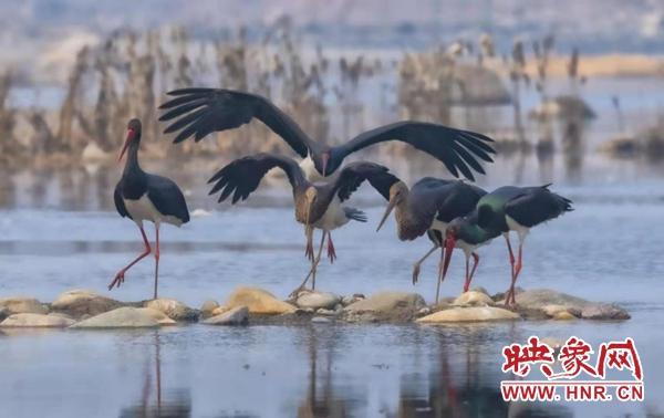 平顶山:鲁山县周玉洲巧建拍鸟基地 成拍客佳作胜地