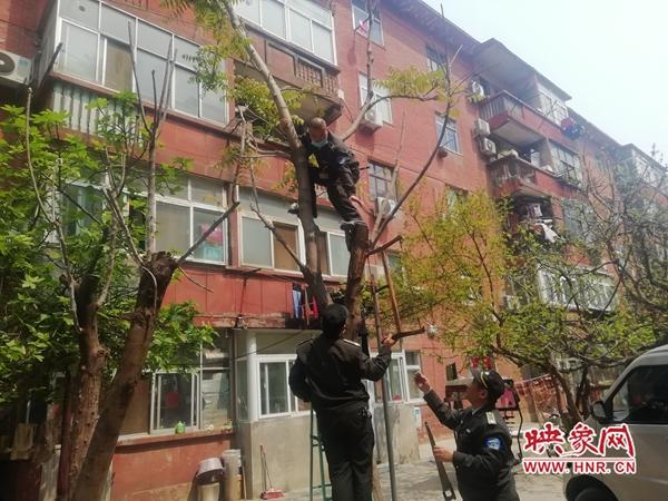 郑州一独居老人小区内种植香椿树挡了邻居采光 无奈寻求帮助