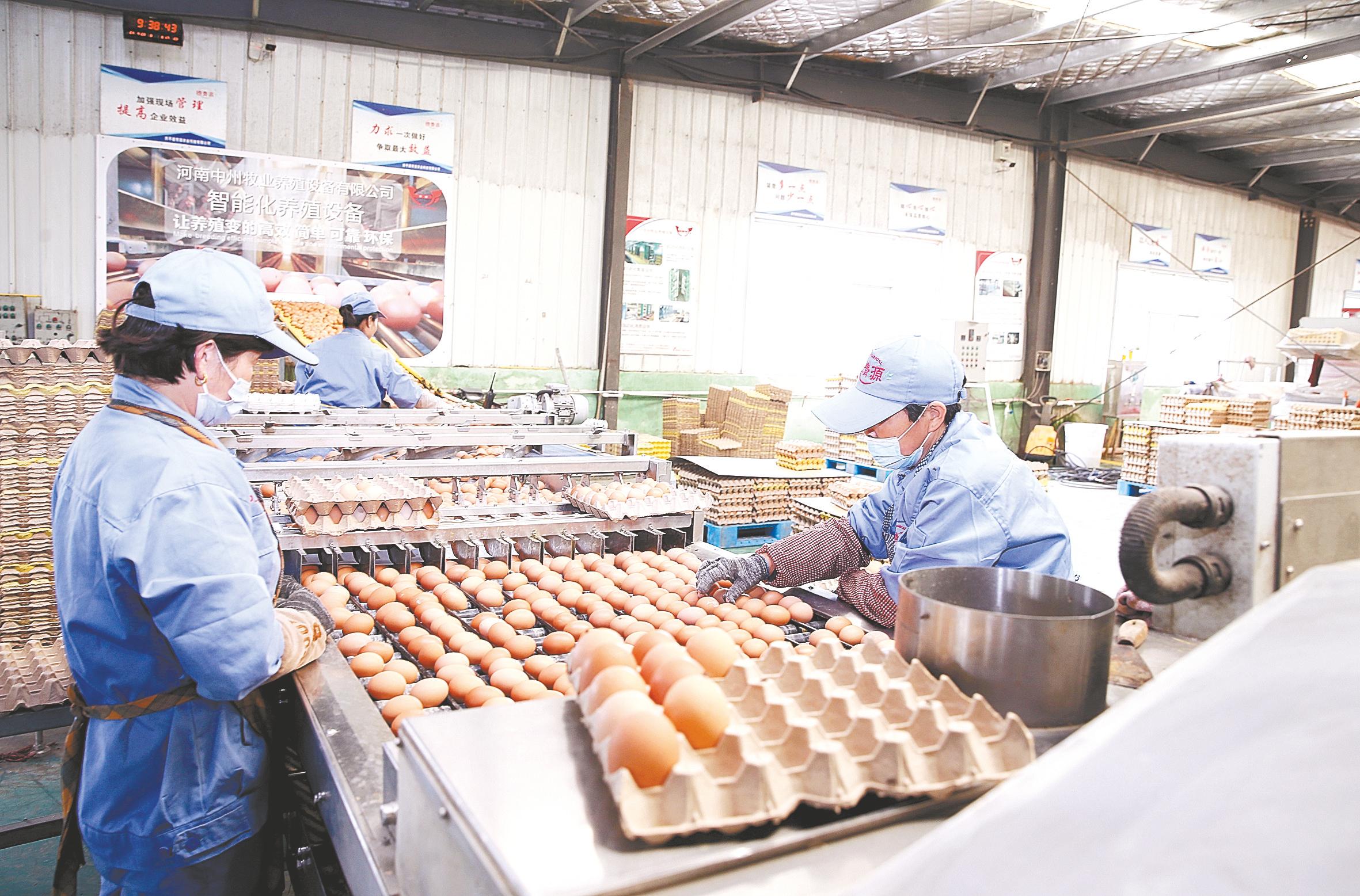 西平县:发展特色农业 助力乡村振兴