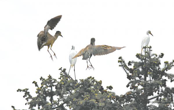 """藏不住了 确山县成为""""鸟的天堂"""""""