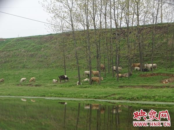 汝南县常兴镇:发展畜牧产业 促进农民增收