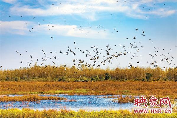 淮滨徐士华:以湿地为家 与鸟为伴