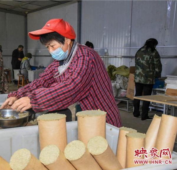 宜阳:艾草飘香产业旺 振兴之路亮堂堂