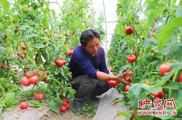 """息县:发展生态循环农业 让农产品""""绿""""起来"""