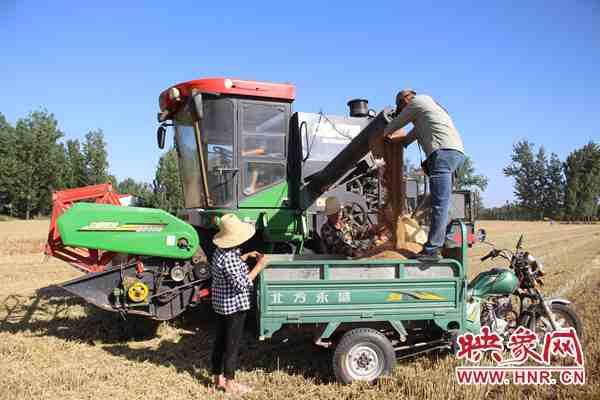 """鲁山县:""""托管班""""里的1500亩农田亩均增产150余公斤"""
