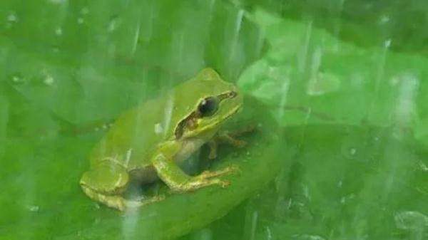 """杭州男子一直想""""补一补"""" 竟然生吞五只青蛙"""
