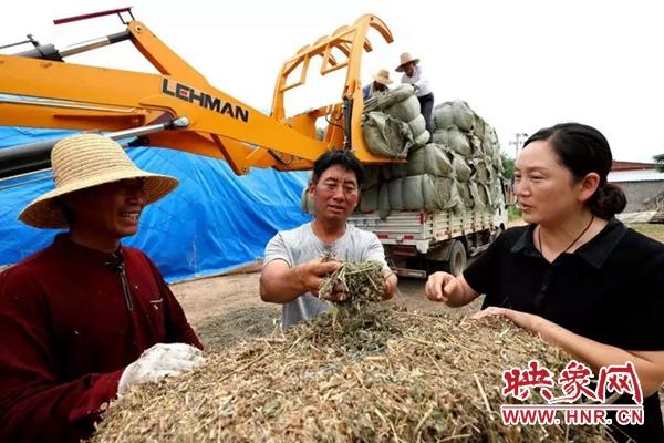 驻马店市蚁蜂镇:打造艾草产业链 助推乡村振兴