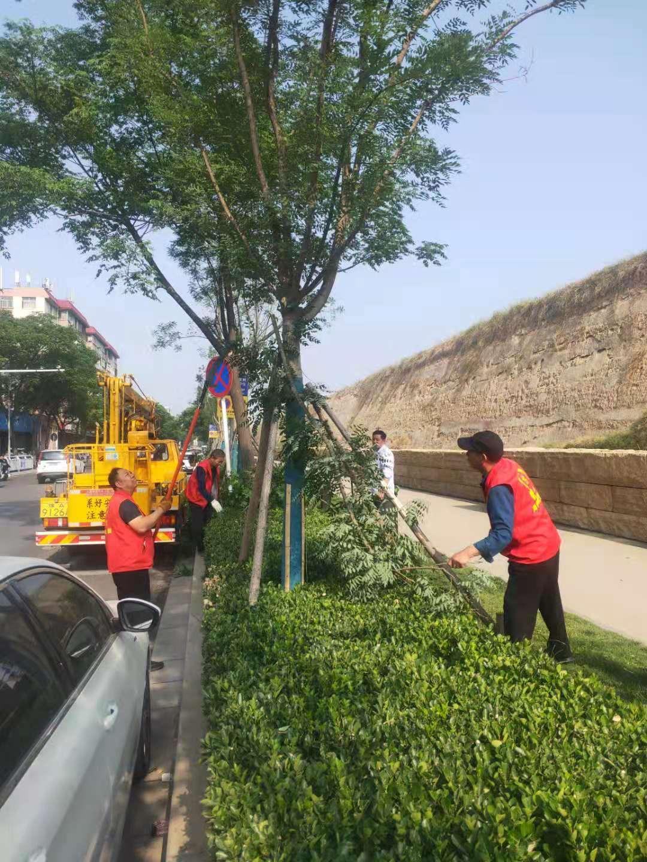 补短板强弱项 郑州市管城区持续强化绿化管养