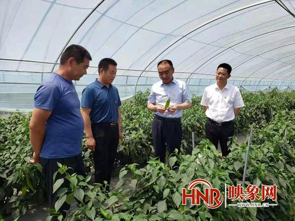 """尉氏县南曹乡:""""一村一品""""持续做大做强农业特色产业"""