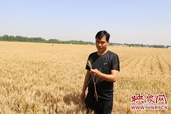 鲁山县张良镇:大型烘干设备让种粮大户不惧连阴天