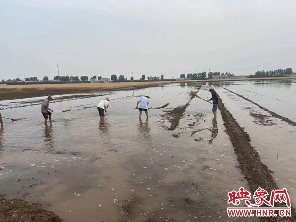 """宝丰县:特色种植趟出新""""稻""""路"""