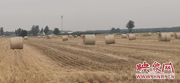 提升农作物秸秆利用效率 西洋店镇积极探索秸秆利用途径