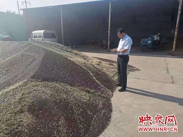 宝丰县:七万亩高标准农田小麦和油菜喜获丰收